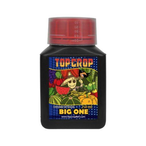 Big One-Top Crop